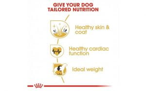 Breed Health Nutrition Golden Retriever Adult