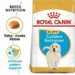 Breed Health Nutrition Golden Retriever Puppy