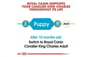 Breed Health Nutrition Cavalier King Charles Puppy