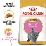 Feline Breed Nutrition British Shorthair Kitten