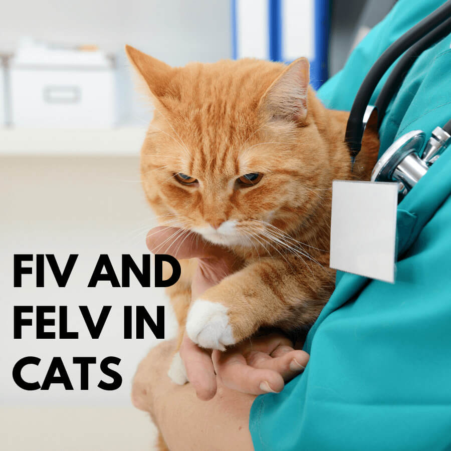 FIV and FeLV in cats