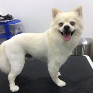 dog-grooming-petshealth silicon oasis