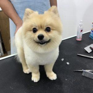 dog-grooming-petshealth silicon oasis two